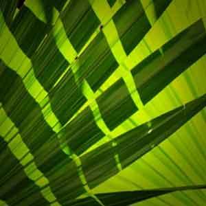 Декоративная зелень